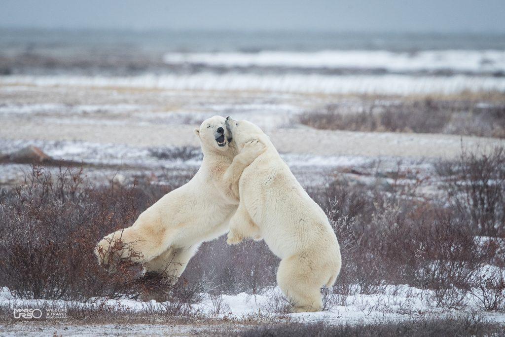 marco-urso-xperience-artico-7