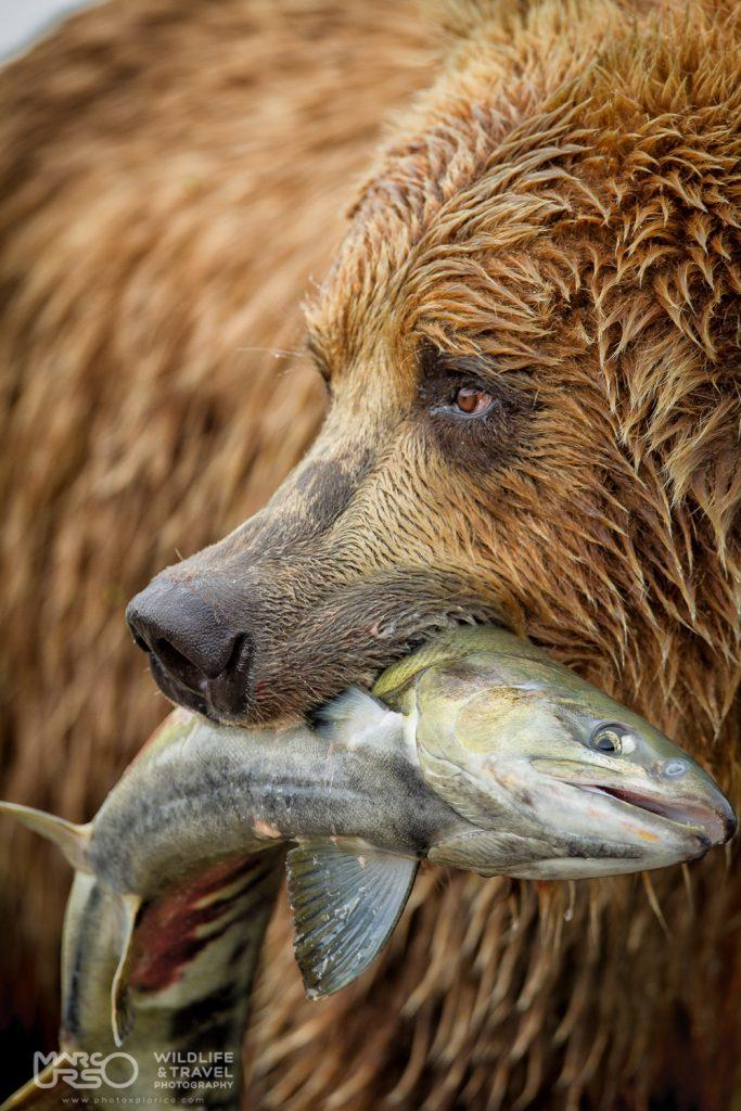 marco-urso-copyright-1