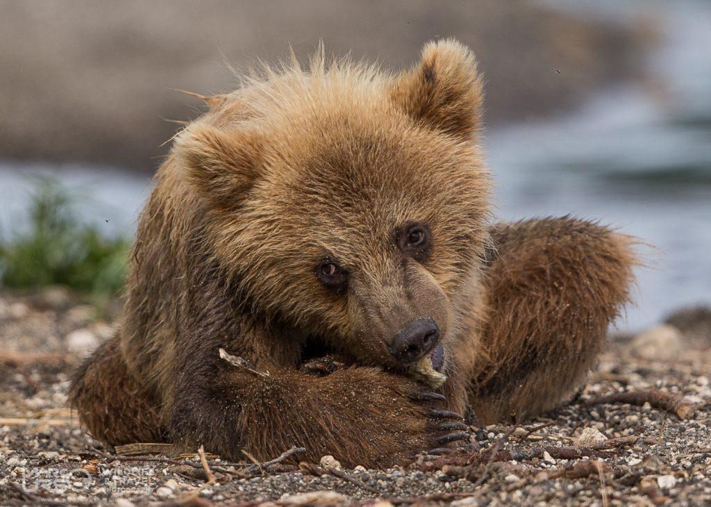 marco-urso-copyright-10