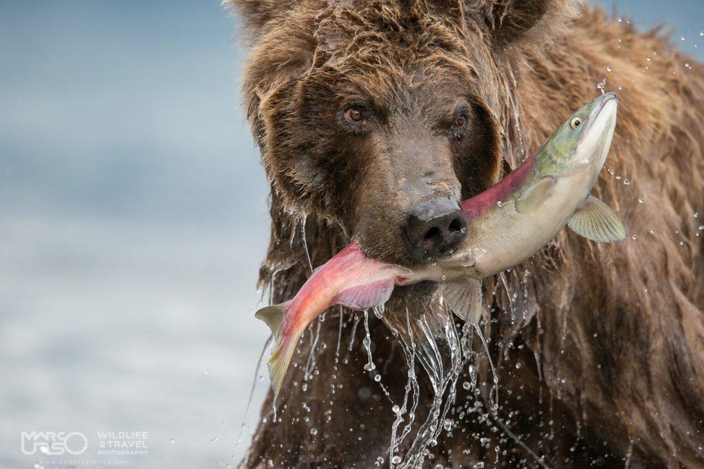 marco-urso-copyright-15