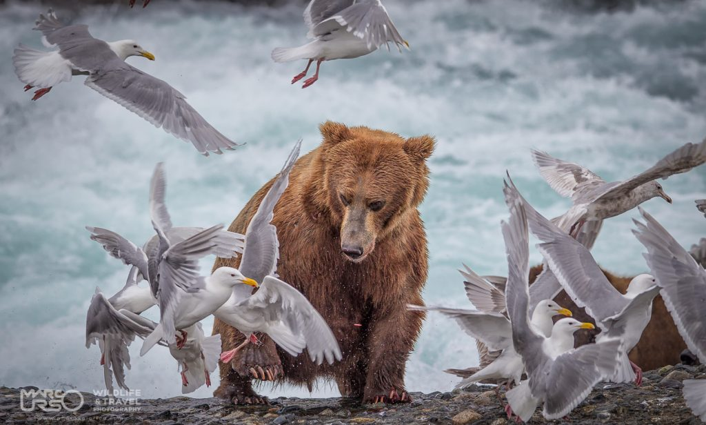 marco-urso-copyright-2