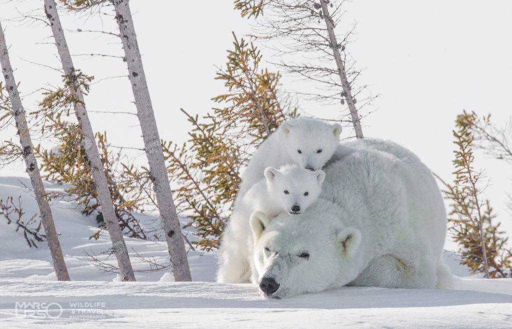 marco-urso-copyright-4
