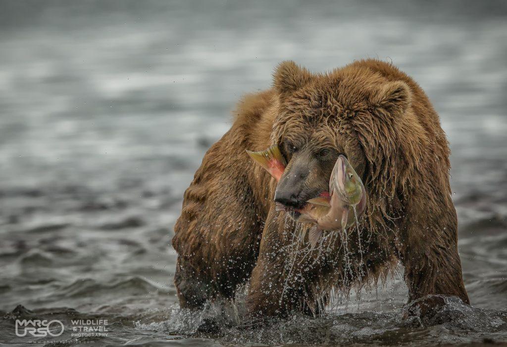 marco-urso-copyright-5