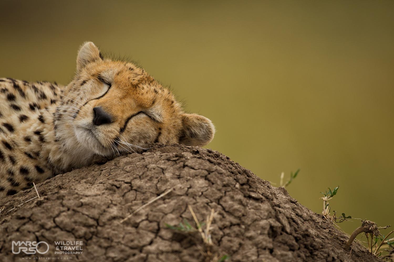 MARCO URSO –  Un safari fotografico dedicato agli animali della savana africana dal 9  al 20 Settembre 2017