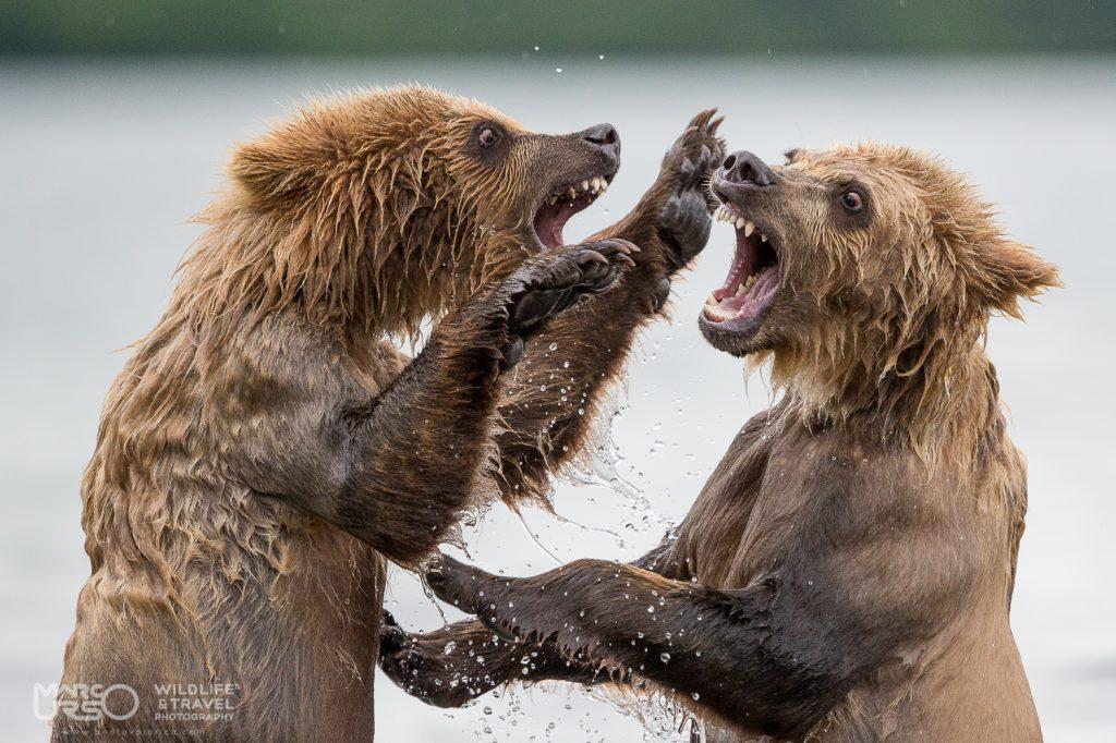 marco-urso-copyright-7