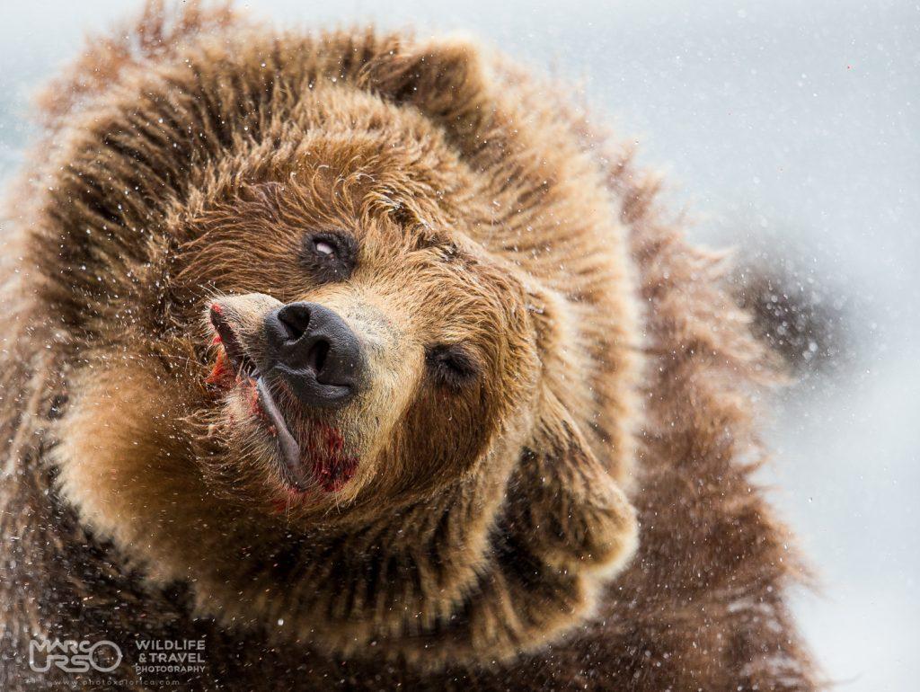 marco-urso-copyright-8