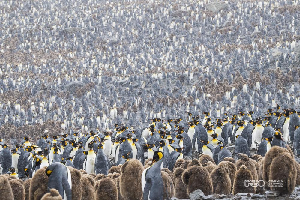 Marco Urso – Antartide oltre il Circolo Polare: paesaggi, pinguini e balene.