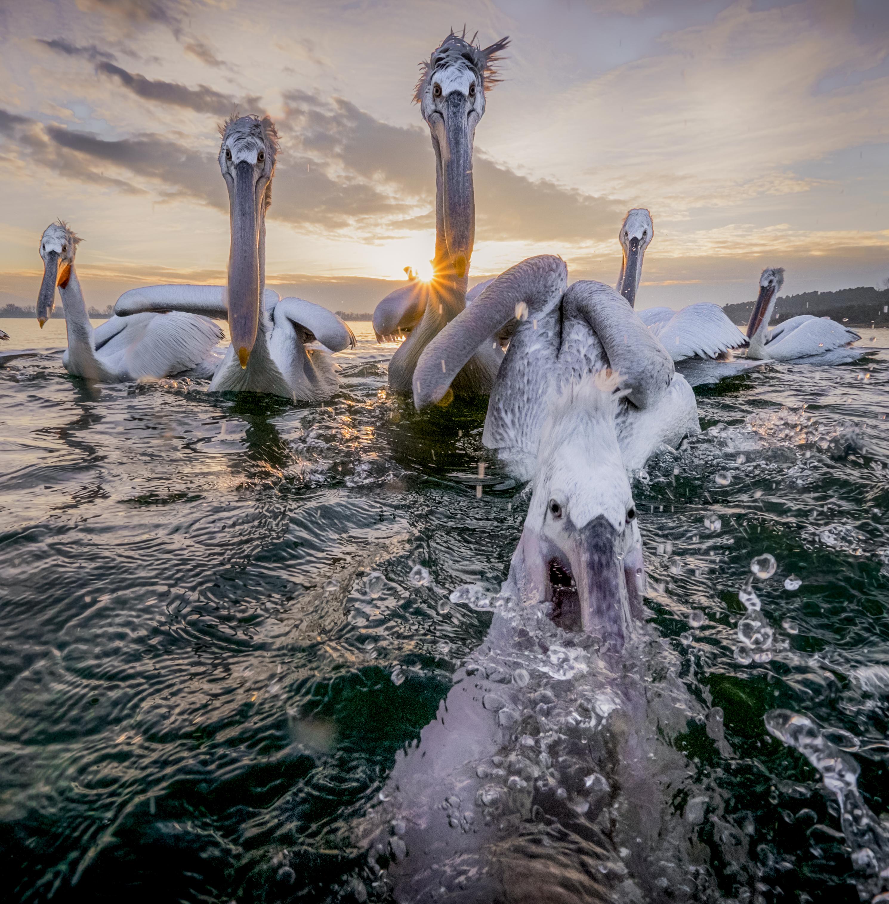 Simone Sbaraglia: Kerkini, un lago, i pellicani, i pescatori, il fotografo.
