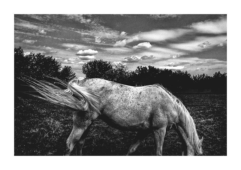 Lorenzo Zoppolato: Le Cronache immaginarie di un domatore di cavalli